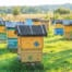 Painted Beehives in a Field